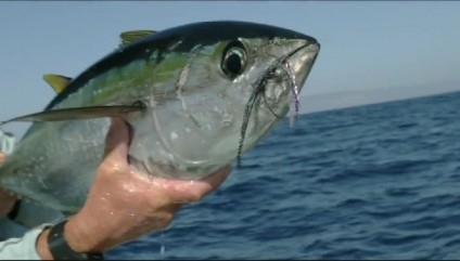 Fly fishing film tour f3t 02 28 2015 corvallis montana for Fly fishing films