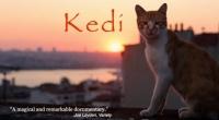 'Kedi: A Thoughtful Purr-suasion'