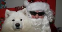 Butte Spay/Neuter Task Force Santa Paws Photos