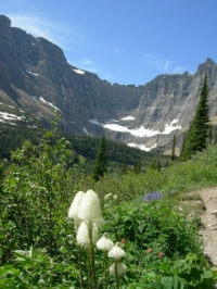 Nature Photography in Glacier Park