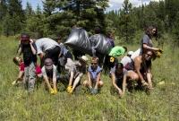 Glacier National Park's Noxious Weed Blitz