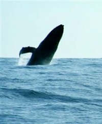 Slack Key Guitar & Ukulele Concert-Whales Homecoming