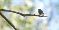 IWFF: BIRDING BLIND