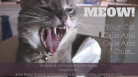 Using Animal Communication With Your Cat