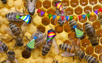 Honey Bee Celebration!