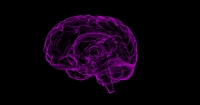 Leadership:  Your Brain at Work