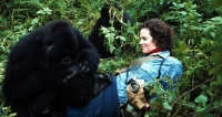 IWFF: GORILLAS IN THE MIST – ALAN ROOT RETROSPECTIVE