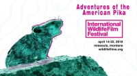 Adventures of the American Pika - Wildlife Film