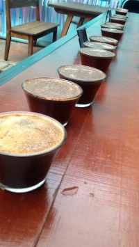 Yes, Coffee is a Fruit:A Closer Look at Oaxacan Coffee