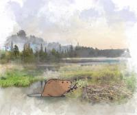 Wildlife Speaker Series - Beavers