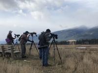 Bird Walk at Lee Metcalf NWR with Five Valleys Audubon