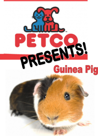 Petco Presents: Guinea Pig!