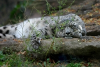Snooze at the Zoo