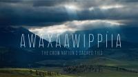 """Film Screening: """"Awaxaawippiia"""""""
