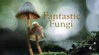"""""""Fantastic Fungi"""" BFS Screening"""