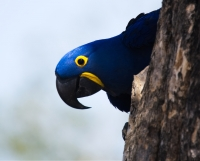 Sacajawea Audubon November Program