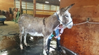 Family Science Day: Oliver the Therapy Donkey