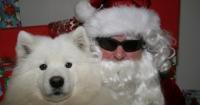 Butte Spay/Neuter Task Force Santa Paws Photos