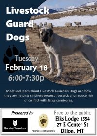 Livestock Guard Dog Presentation