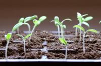 Seed Starting Seminar - Repeat