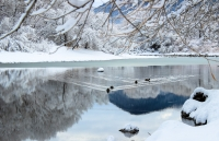 Wings of Winter: Free, Guided Birdwatching
