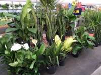 Houseplant & Succulent Seminar
