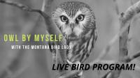 Owl By Myself with the Montana Bird Lady