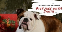Pet Photos With Santa at Tailwaggers in Whitefish
