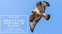 Identifying Raptors in Flight