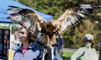 Flathead Audubon Birds of Prey Festival