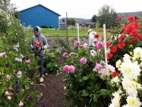 Hurst Flower Meadow U-Pick Flowers and Cafe
