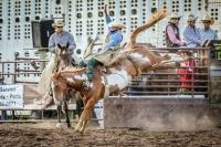 Brash Rodeo Summer Series 2020