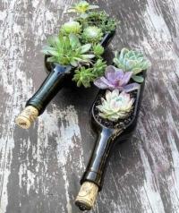 Wine Bottle Succulent Planter Workshop