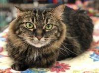 Pet Paw-see Adoptathon