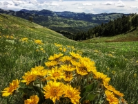 Botany Hike on Mt. Centennial - Rescheduled to June 9
