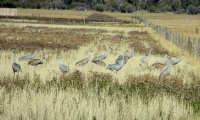 Birds and Wetland Mitigation in Montana