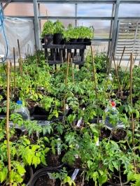 CHS Greenhouse Plant Sale
