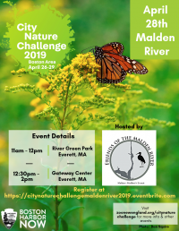 City Nature Challenge on the Malden River