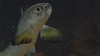 IWFF: Salmon: The Wild Connection & River of Life & Atlantic Salmon