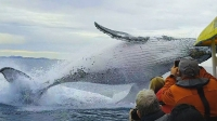 Every Nine Minutes & Humpback Whales: A Detective Story
