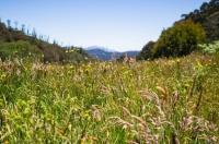 Qigong for Seasonal Health: Summer