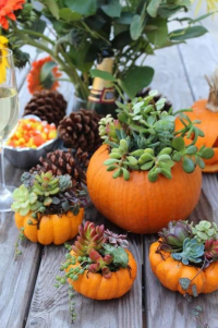 DIY Thanksgiving Succulent Centerpieces