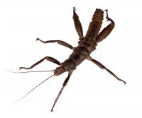 Online Bug Encounters: Animal Weapon Diversity