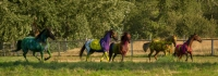 Equine Art Extravaganza: An Equestrian Waltz