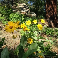 2021 Naturecraft - Gather Summer Camps