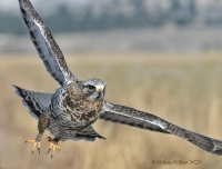 Field trip to Mission Valley with Five Valleys Audubon
