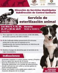 Pet Sterilization / Servicio de esterilización animal