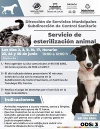 Animal Sterilization/ Servicio de esterilización animal