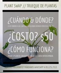 Plant Swap / Trueque de plantas