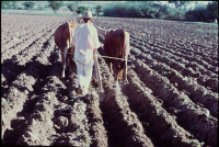 Oaxaca: Indigenous Political Economy/Economy/Economía política indígena